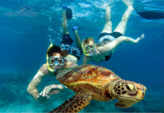 snorkel-couple-turtle160